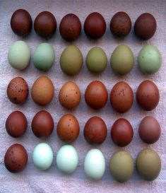 Brown eggs laid by Marans & Welsummers, olive green eggs laid by Olive Eggers, and light blue eggs laid by Araucana hens.