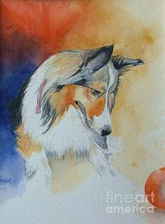 Sadie, a friend's Sheltie, painted in watercolor. 16 X 20