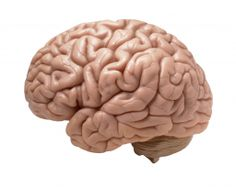 10 Brain Foods  1.    Blueberries  2.    Salmon  3.    Flax seeds  4.    Coffee  5.    Mixed nuts  6.    Avocados  7.    Eggs  8.    Whole grains  9.    Chocolate  10.    Broccoli  http://www.dirjournal.com/health-journal/top-10-brain-foods/  <3