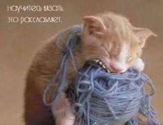 Коты и вязание.