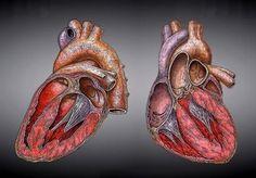 Una escala matemática predice el riesgo de muerte por insuficiencia cardiaca