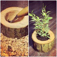 🌱 #morakniv #hookknife #woodcarving #woodpot