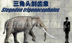Stegodon trigonocephalus by sinammonite on DeviantArt