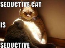 Seductive Cat