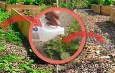cum elimini buruienile cu otet Garden Tools, Diy And Crafts, Plant, Outdoor Power Equipment