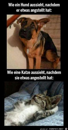 And that's about sums it all up… animals # funny cats # funny dogs # cats vs. dogs # memes # funny memes # cat memes # dog memes Source by cheezburgerpins Cute Funny Animals, Funny Animal Pictures, Funny Cute, Funny Dogs, Funny Memes, Funny Photos, Funniest Animals, Super Funny, Funny Puppies