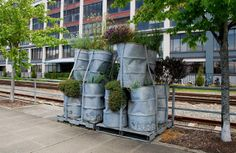 While photographing an inner-city garden near Seattle waterfront, I came across a couple of cool installations by the intersection of Vine Street and Alaskan Way. Several crumpled, distressed-looking oil barrels were tied together on grey steel pallets. All barrels had the word PURGE neatly punched on, and billowy perennials - lavender, Gaura, Achillea, creeping thyme, daylilies, grasses - sprouted from their tops.  I couldn't find any signs or notes telling who made them and why.