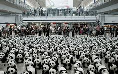 French artist Paulo Grangeon has created 1,600 papier mâché pandas that tour the world. The number of pandas is not random as it represents the number remaining alive in the wild today.