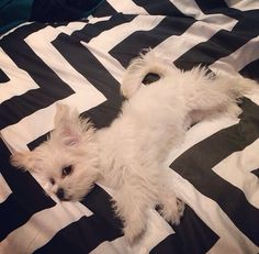 Not sure if we want the puppy or the bedspread more!