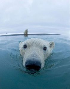 Funny pictures about Curious polar bear is curious. Oh, and cool pics about Curious polar bear is curious. Also, Curious polar bear is curious. Cute Creatures, Beautiful Creatures, Animals Beautiful, Pretty Animals, Cute Baby Animals, Funny Animals, Baby Wild Animals, Baby Giraffes, Funny Cats