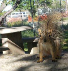 Squirrel Encounter At the Park. Photography #judysart