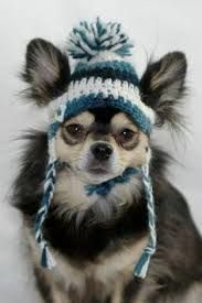 Image result for dog hat with ear holes free crochet pattern