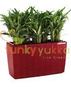 Calathea planted in Red Trough (FYLCHCRT140)
