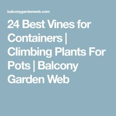 24 Best Vines for Containers | Climbing Plants For Pots | Balcony Garden Web