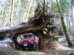 Red Jeep YJ Adventure