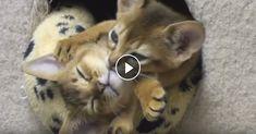 Kittens Hugging – Epic Cuteness►►http://lovable-cats.com/kittens-hugging-epic-cuteness/?i=p