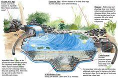 anatomy of a backyard pond