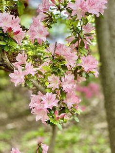Visit: Laurelwood Arboretum, Wayne, New Jersey
