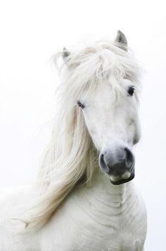 White horse... ♥
