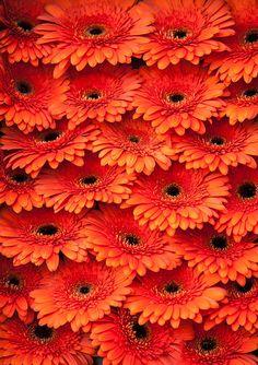 Amsterdam Flower Market by Jenny Rainbow All Flowers, Types Of Flowers, Fresh Flowers, Beautiful Flowers, Art Prints For Home, Home Art, Fine Art Prints, Framed Prints, Amsterdam Flower Market
