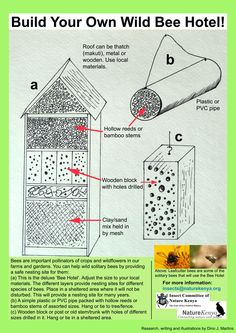 Your Own Bee Hotel PDF. Invite some backyard buddies to pollinate your garden by making a bee hotel. Choose from deluxe or basic version. Invite some backyard buddies to pollinate your garden by making a bee hotel. Choose from deluxe or basic version. Bug Hotel, Wild Bees, Mason Bees, Bee House, National Geographic Society, Bee Friendly, Help The Environment, Bee Happy, Save The Bees