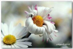 Riprese ravvicinate di fiori e insetti