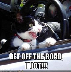 GET OFF THE ROAD, IDIOT!!!    (This is me driving to work)