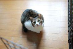 里親さんブログお初の場所、二箇所 - http://iyaiya.jp/cat/archives/73428