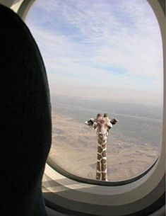 @ Ashley Kudrak - How do you know when you're flying over Africa? ....This may be a good indication....