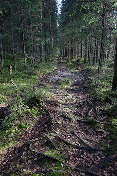 Polku kuusimetsässä by karhutove, via Flickr