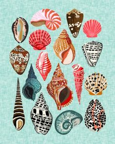 Seashells ocean nautical beach seaside children kids baby home dec shell illustration Andrea Lauren Art Print
