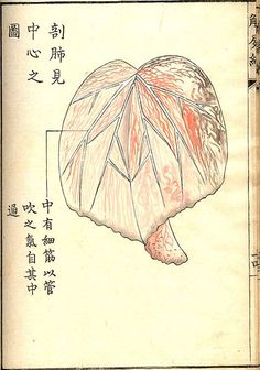 Kaishi Hen, an Century Japanese anatomical atlas Feeling Faint, Anatomy Images, Myths & Monsters, Islamic Paintings, Japanese Illustration, Medical History, Some Words, 18th Century, Fine Art Prints