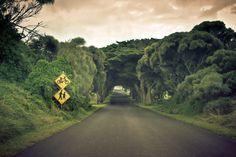 Estrada, árvores, natureza, paisagem, céu, estrada, árvores, natureza, paisagem, céu Vetor