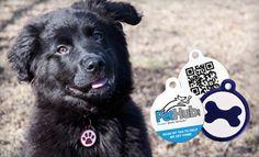Dog Tags with GPS