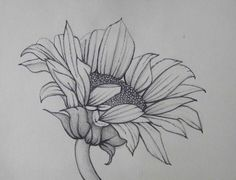 Sunflower Line Drawing : Pencil art work sunflower mixed media original drawing print drawn