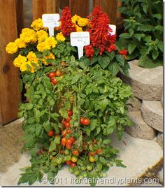 Combine vegetables and annuals or perennials in large pots for the patio