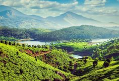 Munnar Tourism, Munnar Travel, Munnar Travel Packages, Munnar Hill Station, Tourist Attractions in Munnar Munnar, The Tourist, Tourist Places, Honeymoon Tour Packages, Honeymoon Destinations, Ushuaia, Largest Countries, Countries Of The World, Valley Of Flowers