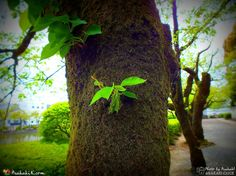 Green and Me... http://www.Arakaki.Click #Green #Nature #Japan #Photo #Photography