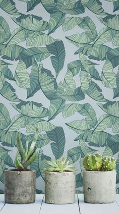 Diving straight into the 2016 interiors trend, we've launched our Tropical Wallpaper Collection. Designed in-house by our team of expert designers, these original prints capture all the essence of the summer vibes with a twist of South American flair. #wallpaper #murals #wallmurals #interior #interiordesign #design #home #homedecor #interiordecor #accentwall #inspiration #Ihavethisthingswithwalls