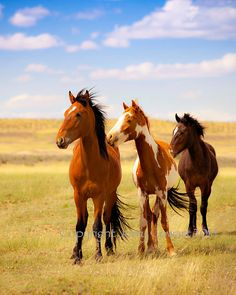 Wild Horses On New Mexico Navajo Indian Reservation Fine Art Photography Print for the home or office. Makes a special gift for people who