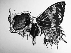 Skull Butterfly Beautifully Incorporated Art Design  Drawing