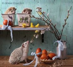 .hedgehogs   Ёжики. Фотограф Елена Еремина 44.