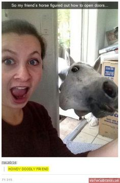 Enjoy the meme 'Lel' uploaded by The_Raggedy_Man. Memedroid: the best site to see, rate and share funny memes! Funny Shit, Funny Horse Memes, Funny Horses, Funny Animal Memes, Cute Funny Animals, Funny Animal Pictures, Funny Cute, Funny Memes, Funny Stuff