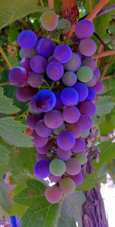 Grab fruit