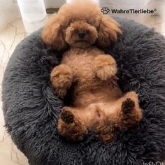 Cute Baby Animals, Animals And Pets, Funny Animals, Funny Animal Videos, Animal Pillows, Dog Bed, Funny Dogs, Cute Puppies, Cute Cats