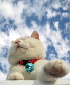 sweet SHIRO :) From: http://kagonekoshiro.blog86.fc2.com/