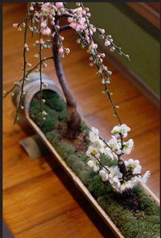 #bonsai art #盆栽 #竹 #梅(Via:  masuo.f  )竹の器がいいですね。保水にヤシマットをどうぞ。