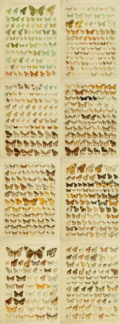 German butterfly book from 1900 loaded with illustrations of butterflies
