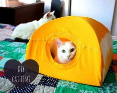 Your pet is like a member of your family, and you want to treat them that way. Unfortunately, with the prices of pet beds it can be hard to give your best. Try the No-Sew DIY Cat Bed to create something completely adorable for your pet. Diy Old Tshirts, Old T Shirts, Lit Chat Diy, Diy Cat Tent, Diy Tent, Sewing Projects, Diy Projects, Project Ideas, Sewing Crafts