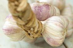 Garlic maintenance and harvest Garlic Chives, Grow Garlic, Garden Works, Incredible Edibles, Wild Edibles, Garden Guide, Gardening, Garden Trees, Grow Your Own